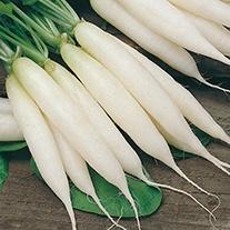 Radish Long White Icicle Seeds
