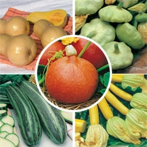 Squash Seed Collection