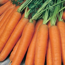 Carrot Nantes 5 Seeds