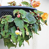 Easi-Plant 12in Hanging Basket