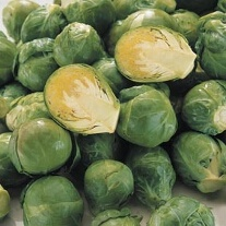 Brussels Sprout Bronte F1 Plants