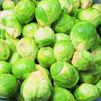 Brussels Sprouts Cascade F1 AGM Veg Plants