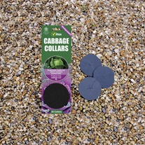 Cabbage Collars-Cabbage Root Fly Protection