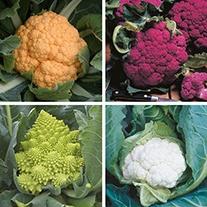 Cauliflower Veg Plant Collection