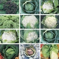 Autumn & Winter Cropping Vegetable Plant Collection