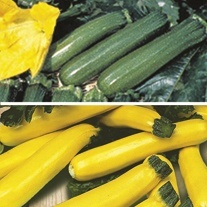 Courgette Veg Plant Collection