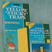 Mini Double Sided Sticky Traps