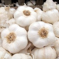 Garlic Provence Wight Bulbs (softneck)
