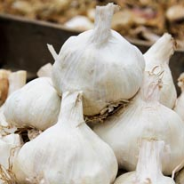 Garlic Vallelado Wight Bulbs (softneck)