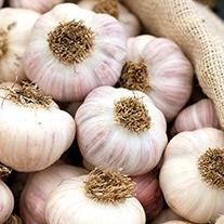 Heritage Garlic Bohemian Rose Bulbs (hardneck)
