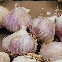 Heritage Garlic Mikulov Bulbs (hardneck)