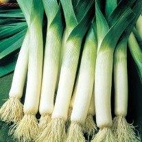 Leek Sultan F1 Veg Plants