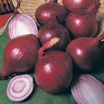 Onion Plants Red Baron AGM
