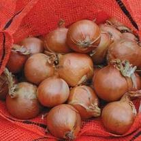 Onion Nets
