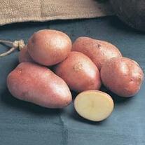 Potato Desiree (Maincrop Seed Potato)