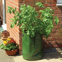 Potato Grow Sacks