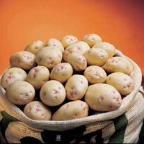 Maincrop Potatoes Cara