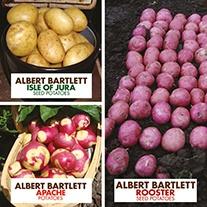 Albert Bartlett Seed Potato Collection
