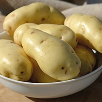 Potato Sarpo Kifli (Early Maincrop Seed Potato)