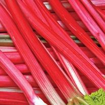 Rhubarb Raspberry Red Crowns AGM