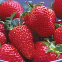 Strawberry Mara des Bois Fruit Plants