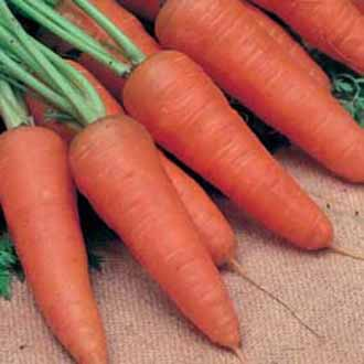 Carrot Royal Chantenay 3