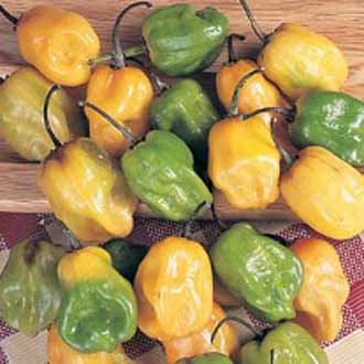Pepper (Hot) Habanero AGM Seeds