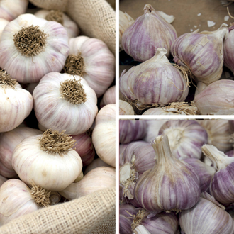 Heritage Garlic Bulb Collection
