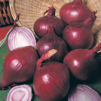 Heat Treated Onion Red Baron AGM Bulbs