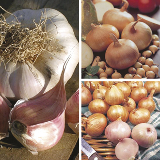 Spring Planting Onion, Shallot and Garlic Bulb Collection
