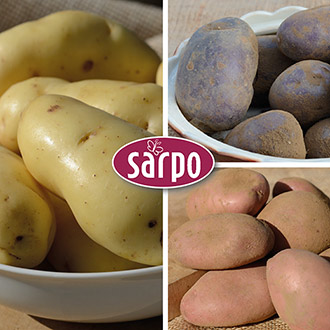Blight Resistant Sarpo Potato Collection