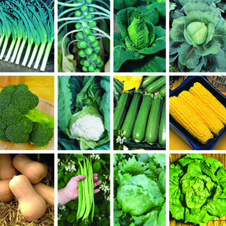 Ultimate Vegetable Plant Collection