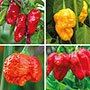 The World's Hottest Chilli Plant Collection