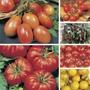 Indoor and Outdoor Tomato Seed Collection