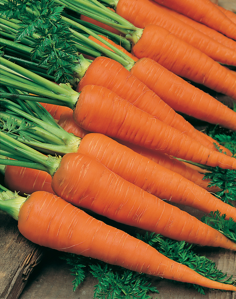 how to grow carrots from seed uk