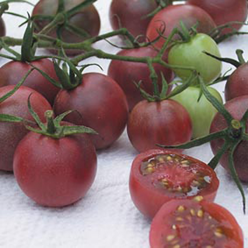 Tomato chocolate cherry seeds d t brown vegetable seeds for How to grow cherry tomatoes from seeds
