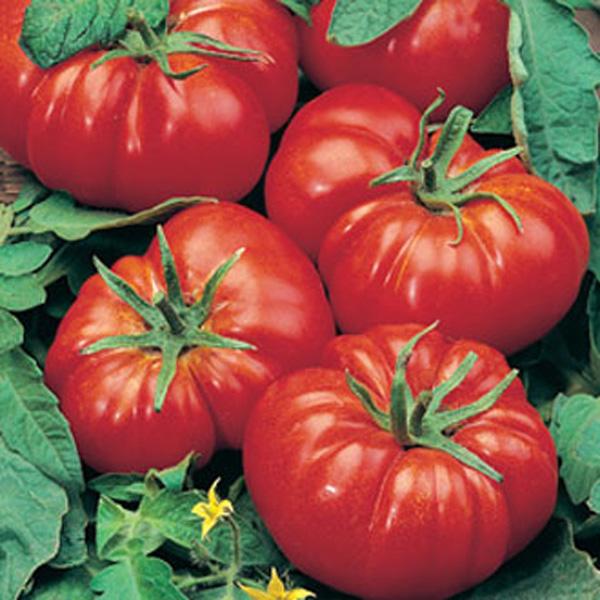 Tomato Marmande AGM Seeds on Plant Matters Seeds Fruit Trees