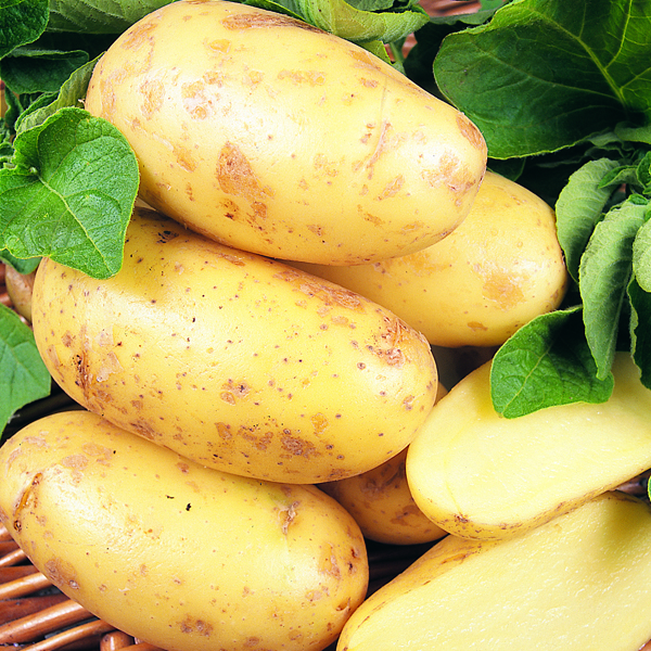 how to grow early potatoes