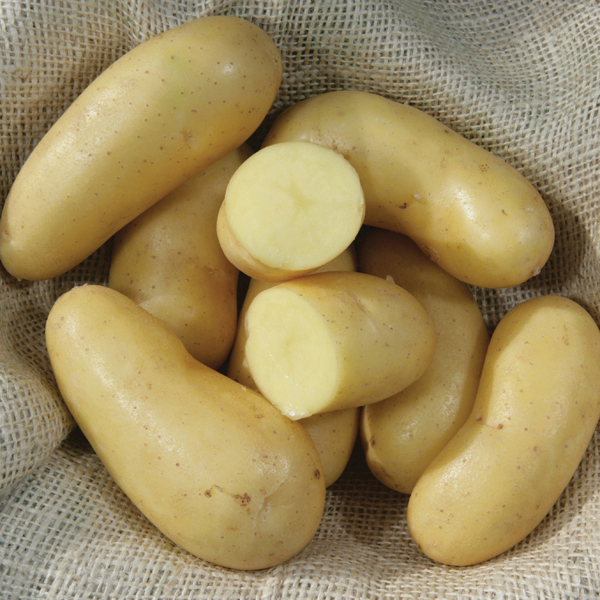 mayan gold potato
