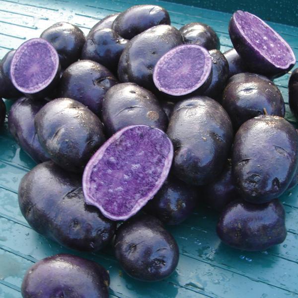 Potato salad blue maincrop seed potato d t brown seed