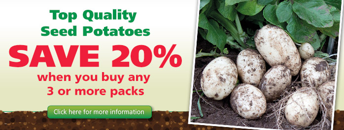 Seed Potato Offer