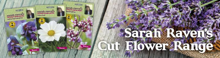 Cut Flowers & Gorgeous Gardens|Sarah Raven Seeds from Johnsons