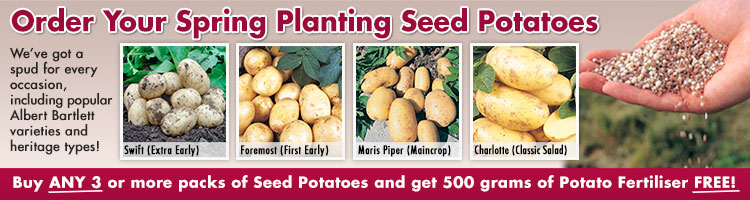 Main Crop Seed Potatoes from Mr Fothergill's Seeds and Plants