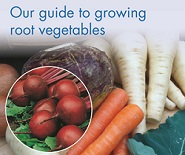 Guide to growing root vegetables including carrots