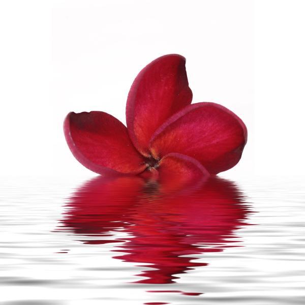 Aufkleber geschirrspülmaschine Blume spiegelung 60x60cm  ~ Geschirrspülmaschine Installieren
