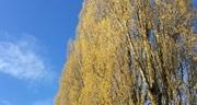 Spuitzone-bij-hoge-bomen