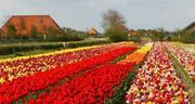 Spuitzone-bloembollenveld