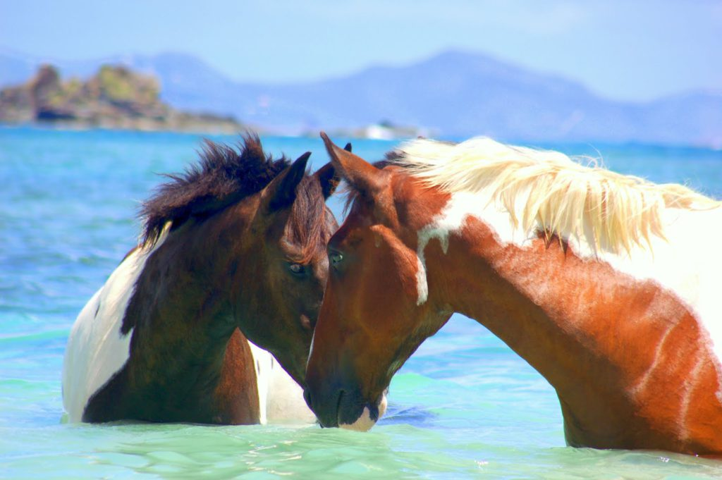The magic of horses on a luxury retreat www.jessicamcgregorjohsnon.com