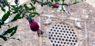 Pomegranate, or the apple from carthage