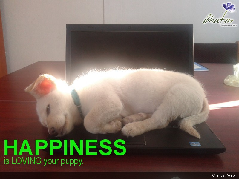 Happiness is LOVING your puppy.